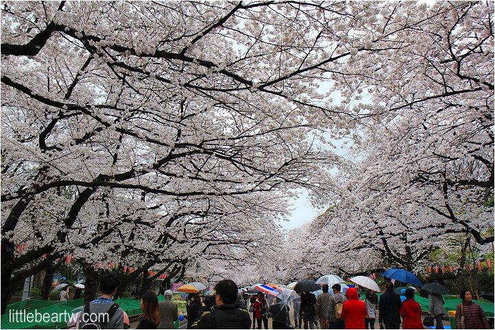 【關東溫泉Day6-1】上野:櫻百選 – 上野公園櫻滿開