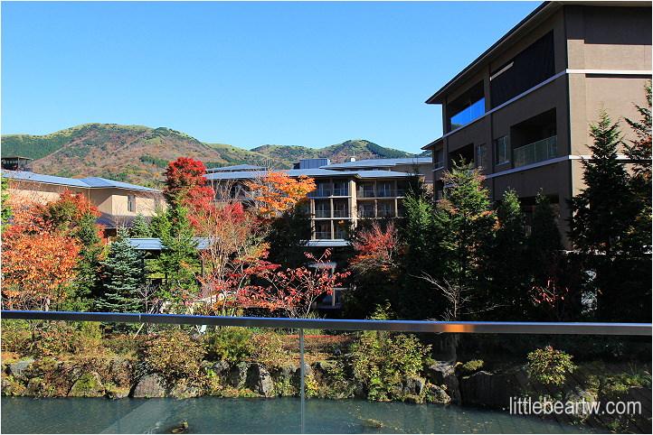 【箱根紅葉Day3-4】仙石原溫泉住宿:箱根翡翠(Hotel Harvest Hokone Hisui) – 綠意與水包圍的度假村、房間寬敞、兩種名湯、晚餐單點吃到飽