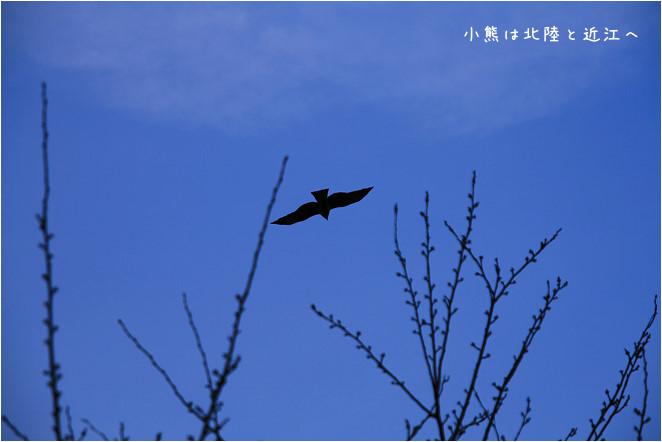 琵琶湖-19