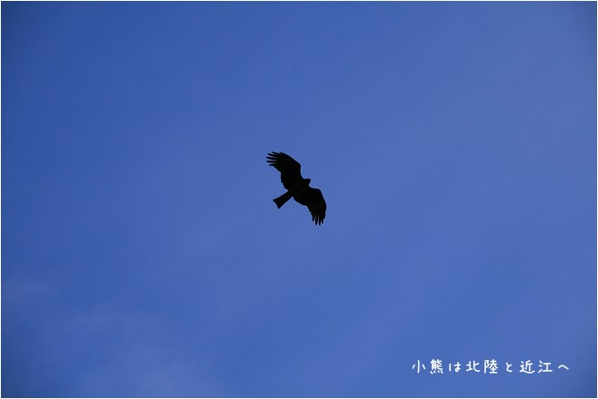 琵琶湖-18