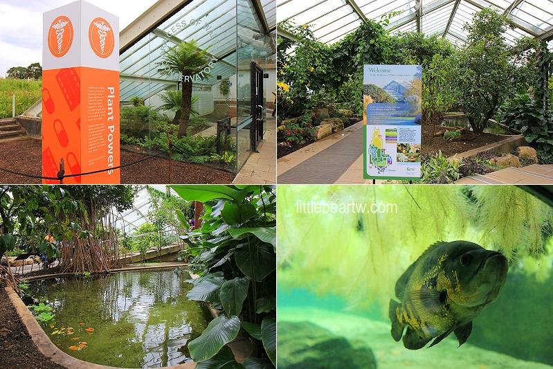 邱園Kew Gardens-50