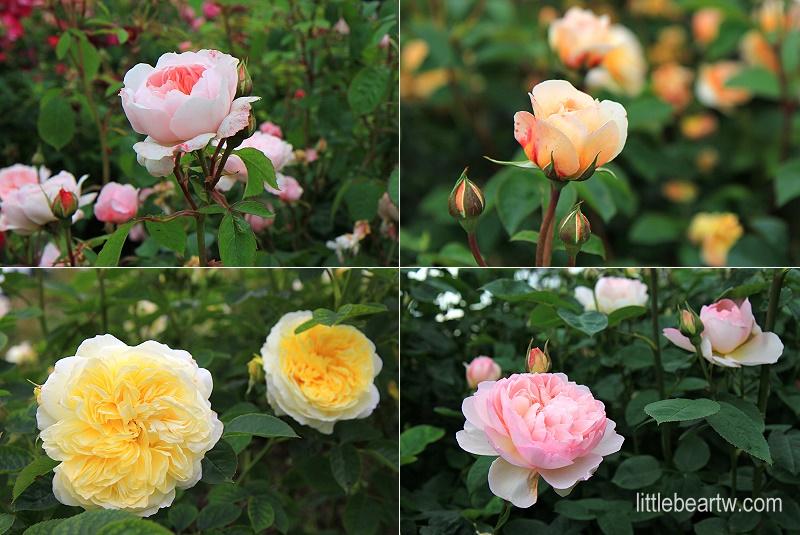 邱園Kew Gardens-21