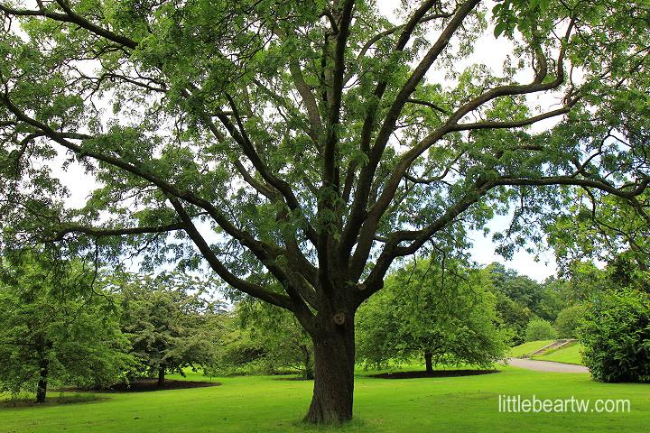 邱園Kew Gardens-32